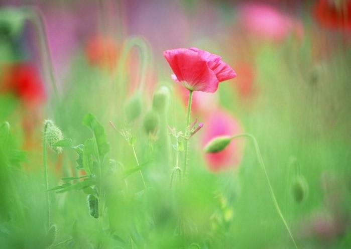 Ванильные фотографии цветов от Sozaijiten 35 (700x496, 46Kb)