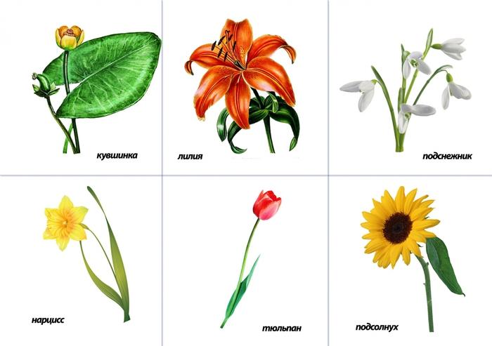 Садовые цветы картинки с названиями детский сад