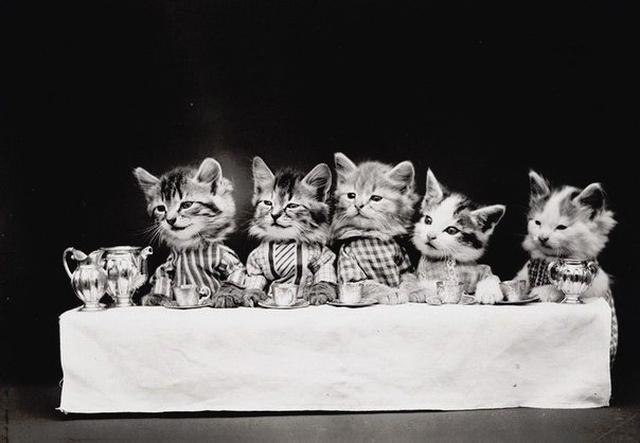 Забавные коты 3085196_fc2 (640x443, 32Kb)