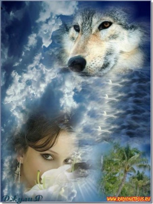 Марта, картинки одинокая волчица