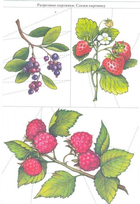 разрезные картинки по теме грибы ягоды домик тоже