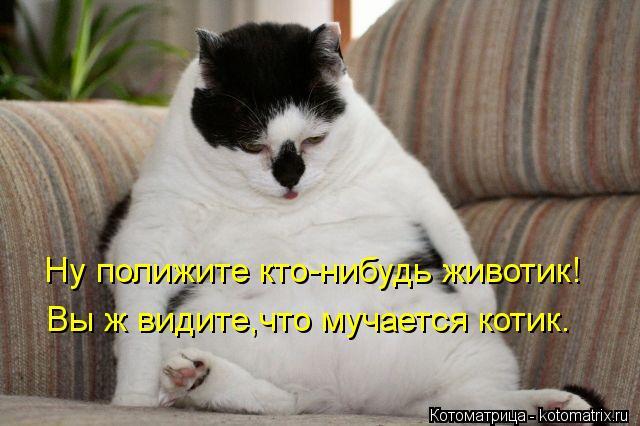 Котоматрица-2012. Выпуск 31 kotomatritsa_9L (640x426, 47Kb)