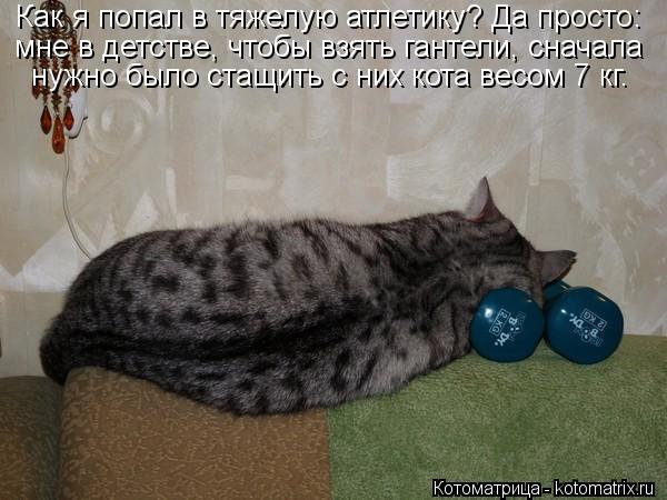 Котоматрица-2012. Выпуск 31 kotomatritsa_cp (600x450, 49Kb)