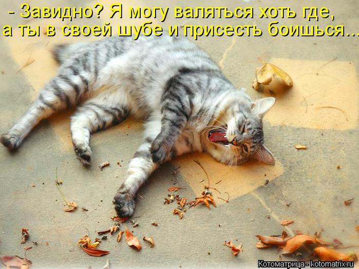 Котоматрица-2012. Выпуск 31 kotomatritsa_Ki (700x524, 71Kb)