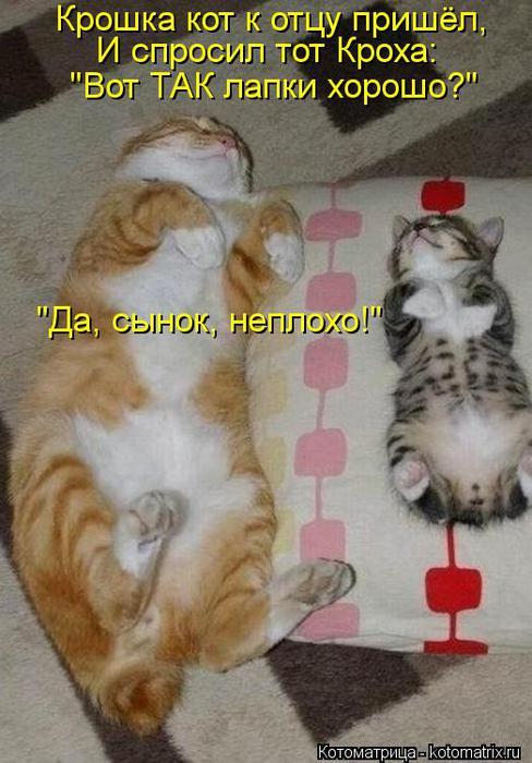 Котоматрица-2012. Выпуск 31 kotomatritsa_lP (488x700, 58Kb)