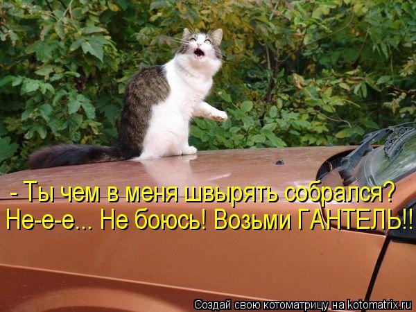 Котоматрица-2012. Выпуск 31 kotomatritsa_OK (600x450, 61Kb)