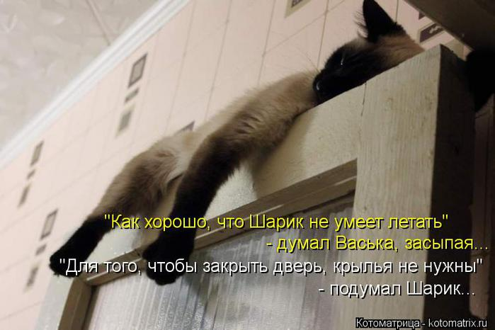 Котоматрица-2012. Выпуск 31 kotomatritsa_q1 (700x466, 42Kb)