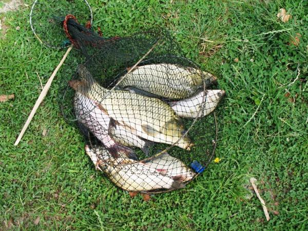 Рыбалка на Днепре на ерша-носаря
