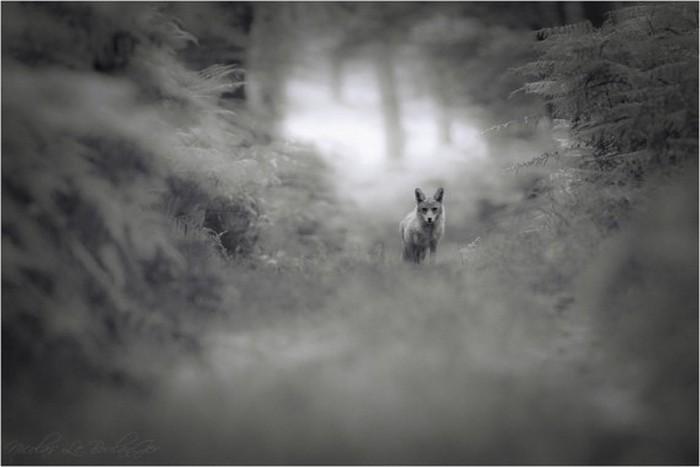 Сказочные фото-пейзажи от Nicolas LB 18 (700x467, 42Kb)