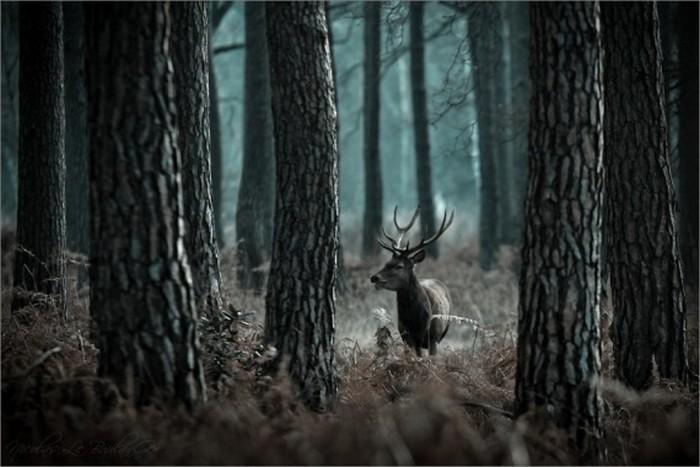 Сказочные фото-пейзажи от Nicolas LB 23 (700x467, 77Kb)