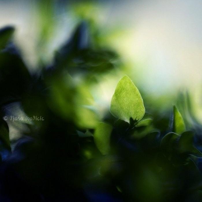 Нежное макро-фото от фотографа Tjasa Maticic 10 (700x700, 60Kb)