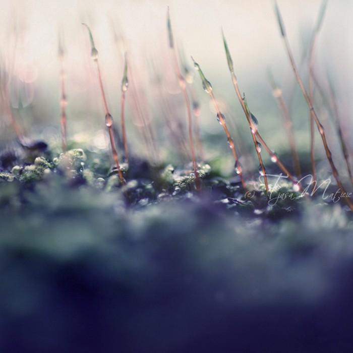 Нежное макро-фото от фотографа Tjasa Maticic 12 (700x700, 75Kb)