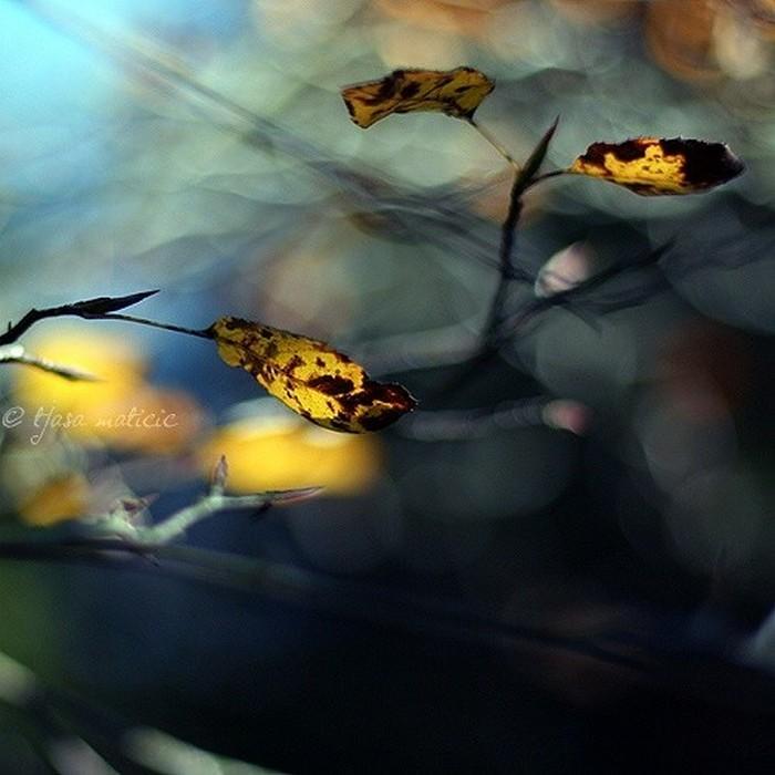 Нежное макро-фото от фотографа Tjasa Maticic 16 (700x700, 87Kb)