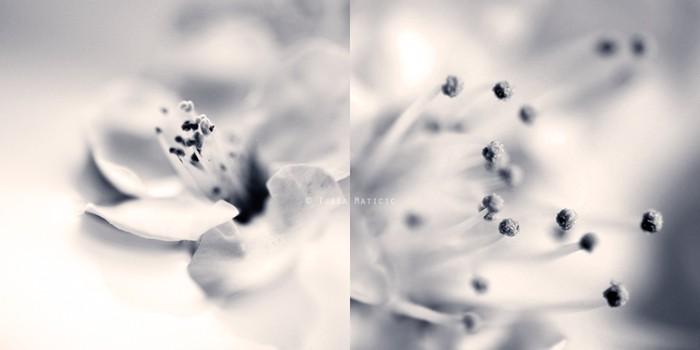 Нежное макро-фото от фотографа Tjasa Maticic 24 (700x350, 31Kb)