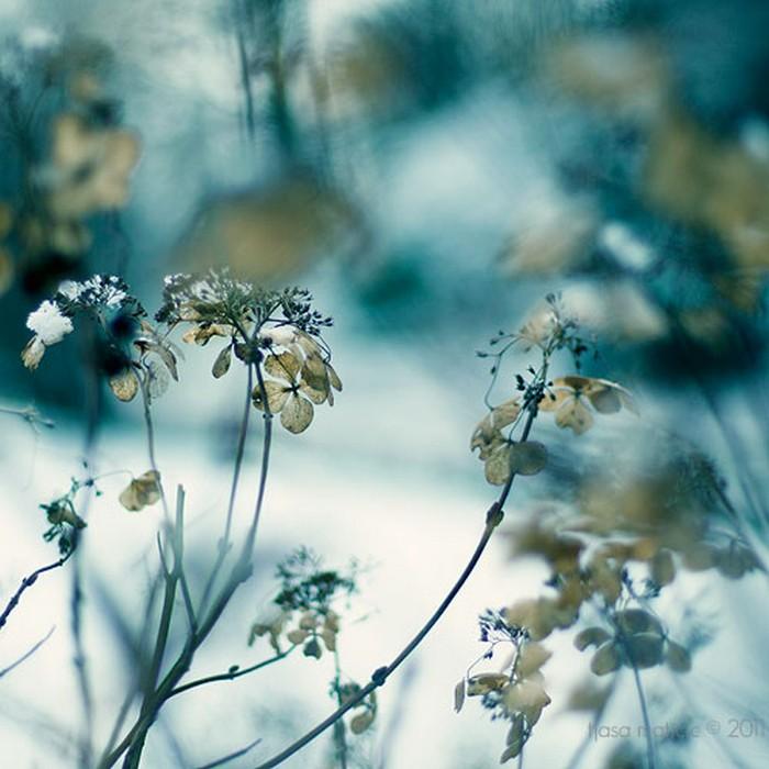 Нежное макро-фото от фотографа Tjasa Maticic 32 (700x700, 93Kb)