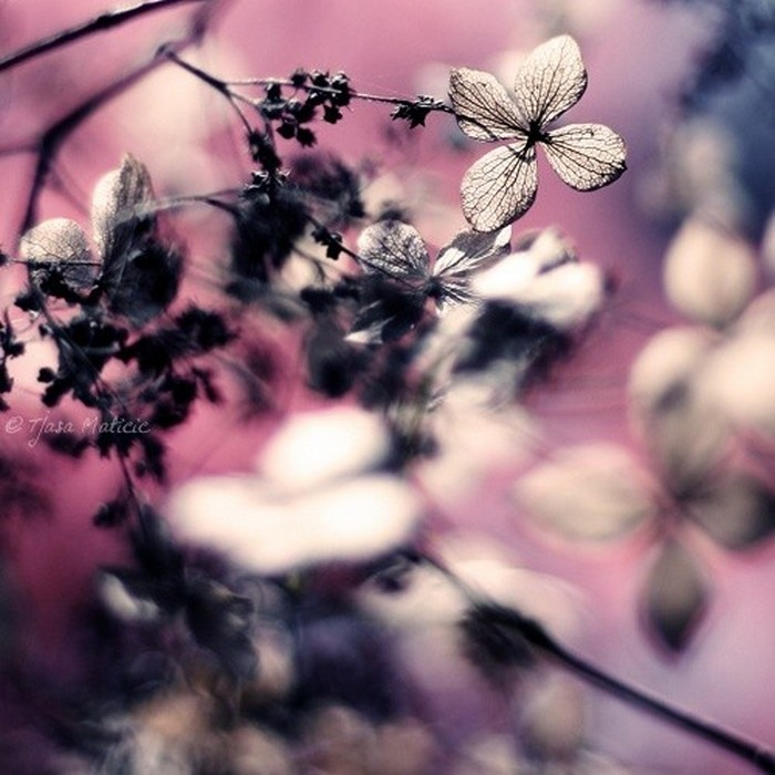 Нежное макро-фото от фотографа Tjasa Maticic 34 (700x700, 95Kb)