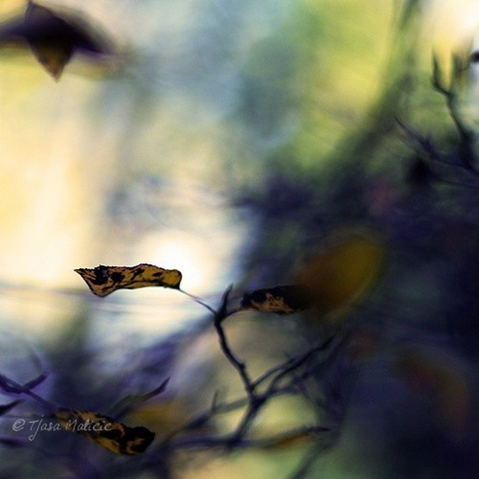 Нежное макро-фото от фотографа Tjasa Maticic 36 (700x700, 72Kb)