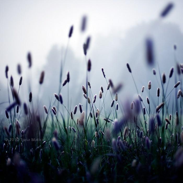 Нежное макро-фото от фотографа Tjasa Maticic 40 (700x700, 80Kb)