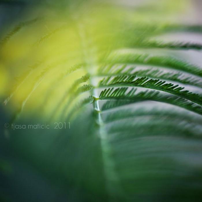 Нежное макро-фото от фотографа Tjasa Maticic 42 (700x700, 55Kb)