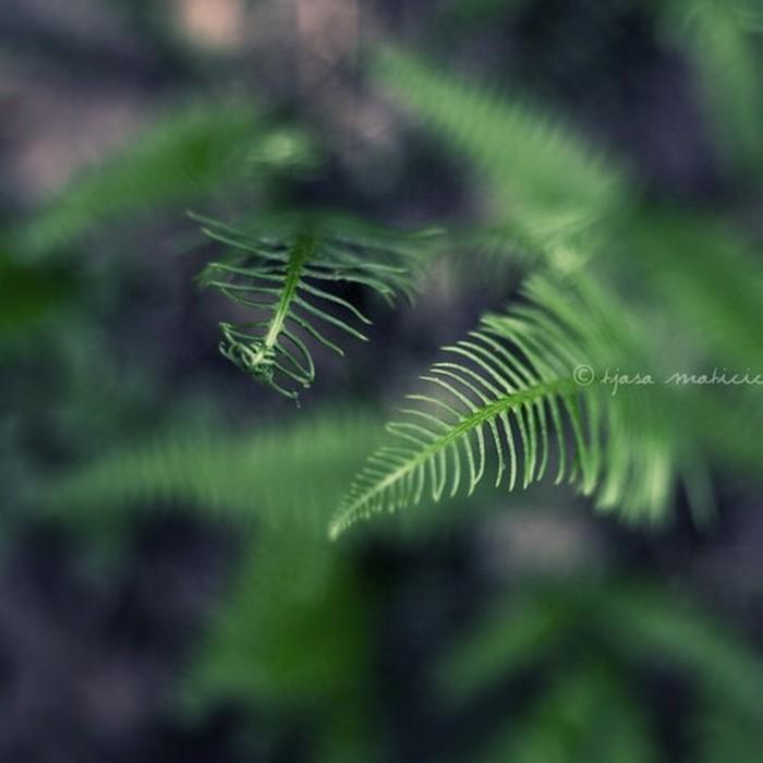 Нежное макро-фото от фотографа Tjasa Maticic 50 (700x700, 58Kb)