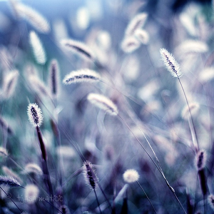 Нежное макро-фото от фотографа Tjasa Maticic 58 (700x700, 114Kb)