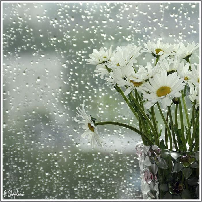 дождь картинки с добрым утром