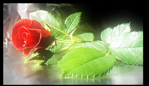 2714816_82859988_2714816_mod_article1756666_7 (500x289, 279Kb)