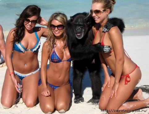 monkey-with-three-hot-girls-in-bikinis-on-beach-copping-feel (482x371, 103Kb)