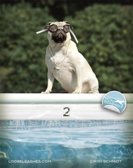 прикольные фото собак 12 (553x700, 96Kb)
