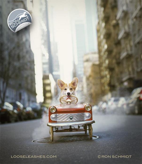 прикольные фото собак 16 (604x700, 97Kb)