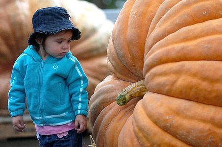 3407372_large_pumpkin_1 (453x300, 53Kb)