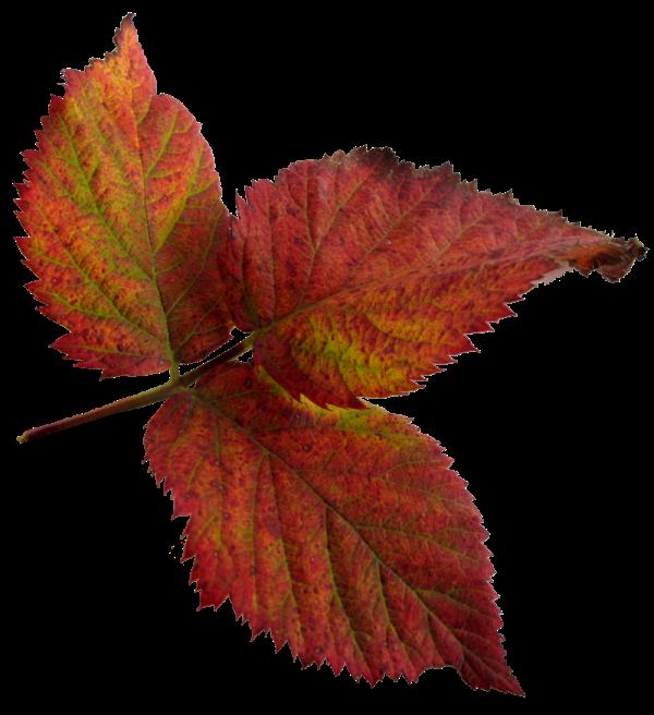 Temalarınız için png formatında yaprak resimleri 7