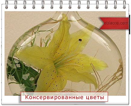 Цветы во флаконе, в глицерине...Консервируем осень