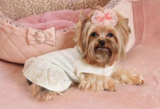 платье для собаки выкройка вязанная одежда для собак схемы 27