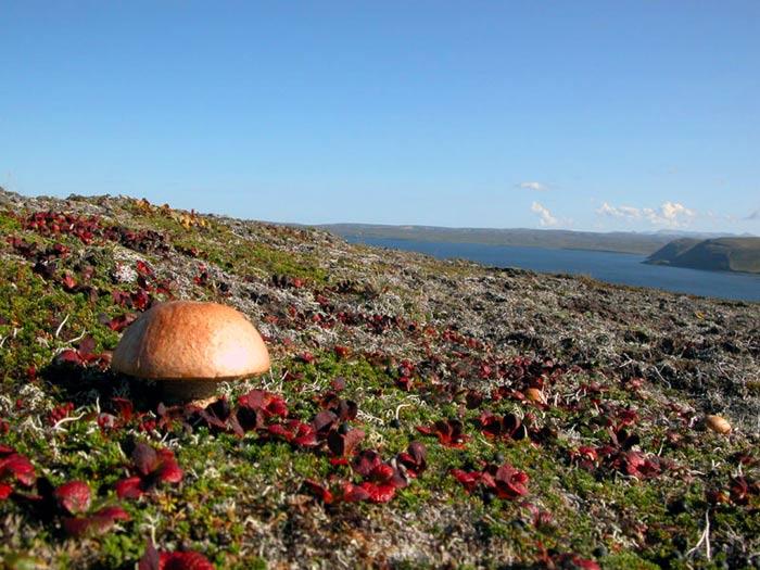 про северные грибы фото тундры и липецком районе построен