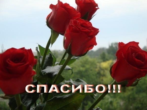 Спасибо открытка розы, оформления поздравительных открыток