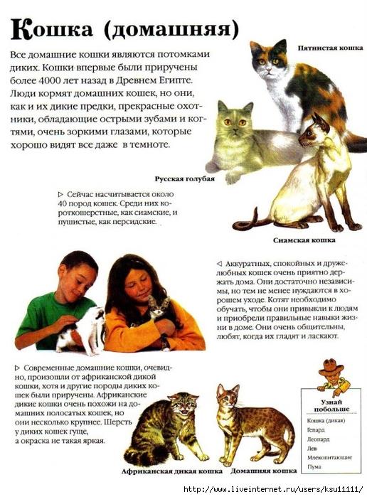 Статьи о домашних питомцах