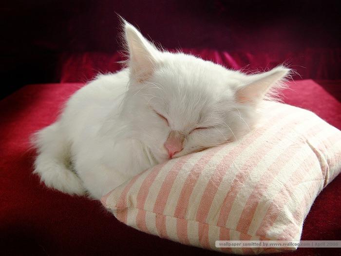 http://img0.liveinternet.ru/images/attach/c/7/94/123/94123444_Cat_328.jpg