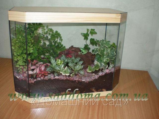 Флорариум из аквариума своими руками 23