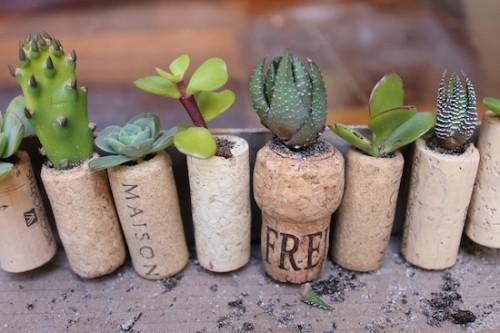cork_planters11-500x333 (500x333, 48Kb)