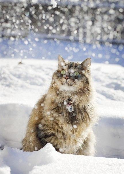 красивые фото животных зимой