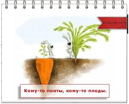 кофе из помета слона/3518263_ponti (434x352, 137Kb)