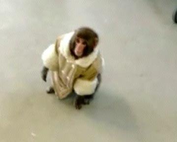обезьяна в магазине/3518263_bbb (360x288, 8Kb)