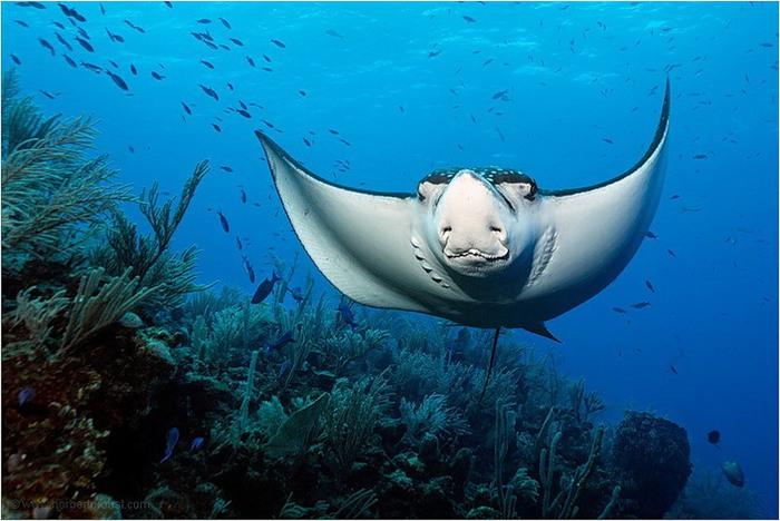 Atlantic ocean underwater animals