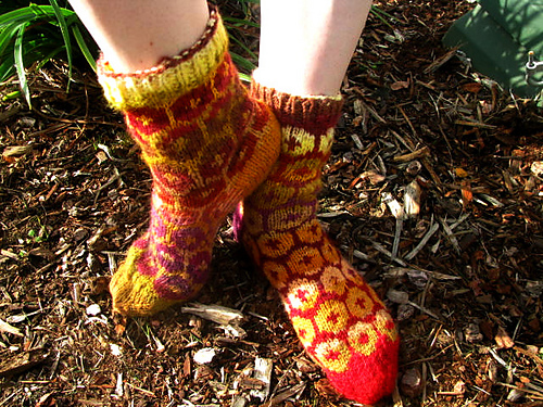 socks2_medium (500x375, 221Kb)