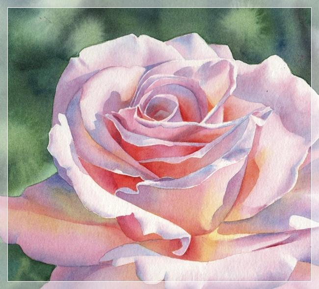 Акварель роза - описание сорта, как вырастить в своем саду