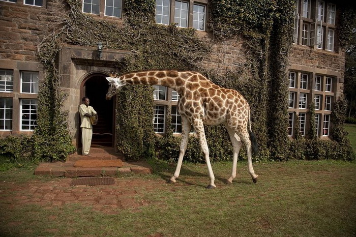 giraffe-manor-1 (700x466, 189Kb)