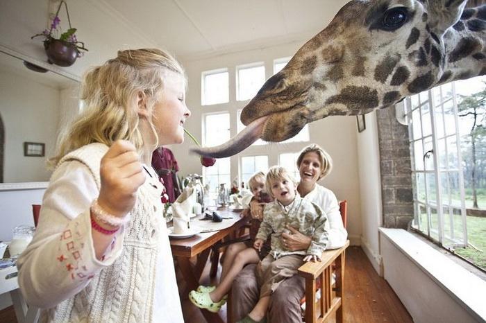 giraffe-manor-4 (700x466, 131Kb)