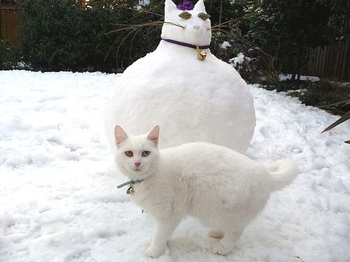 кот снеговик