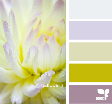 Dahlia-design-seeds (428x400, 144Kb)